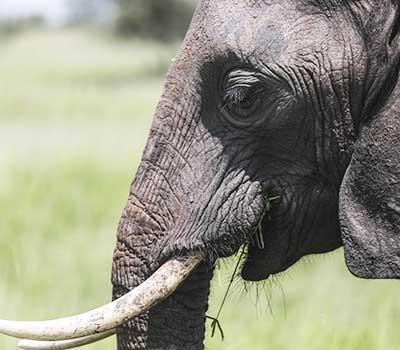 8-days-safari