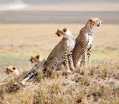 serengeti-budget-safari