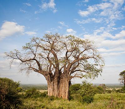 tarangire-budget-safari