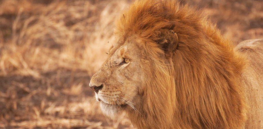 How Much Does A Safari Cost In Tanzania Tanzania Safari Safari In Tanzania Tanzania Safari Tours